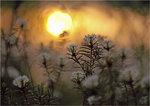 Skvattram i solnedgång