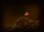 Lampan på kullen