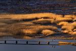 Vinterpromenad på bryggan