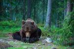 Bedjande björn