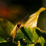 Insekt i solljus