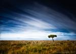 Ensamt träd, igen.