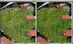 Irident vs CameraRaw