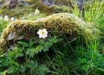 Blomma - Spirudden