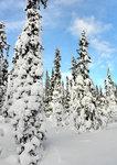 Den mjuka skogen