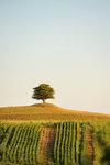 Ensamma trädet i Rörum