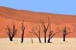 Deadvlei, Namib Desert