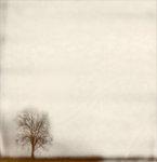 Ensamhetens träd