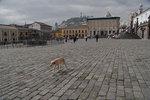 Walk in Quito