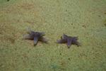 Vill du se en stjärna...