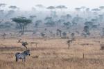 Serengeti i dimma