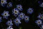 Lysande blomma