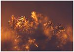 Gyllene frost