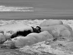 Inbäddad i is