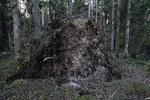 Bilder från skogen vid Skogsö Norra