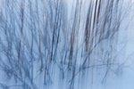 Buske i snö 1