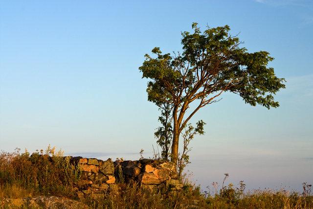 Trädet och husgrunden