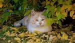 Kamoflerad katt