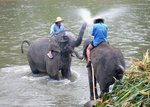 Elefantdusch