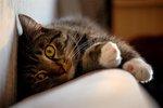 katten mys