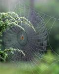 Som spindeln i nätet