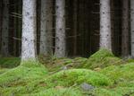 I skogsgläntan bland tomtar och troll