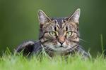 Astrid i gräset