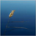 Vass mot blått