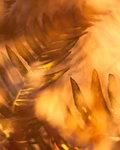 Rostande sågblad