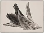 Fredsduvedelfin
