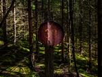 Skylt 39 i skogen