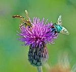 Nectar Lovers