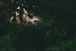 Skogens lugnande lek med solen