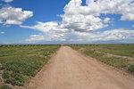 """Serengeti - """"Oändliga Slätten"""" på Swahili"""