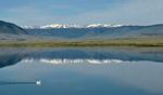Pelikan, Laramie, Wyoming