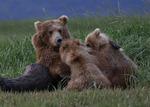 Björnlunch