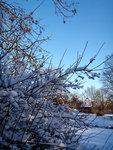 Januarisnö