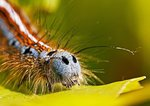 En liten larv
