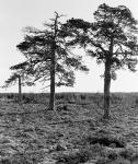Trä i rad