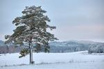 Vintertall