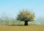 Det vita trädet