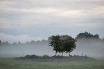 Rönn i dimma