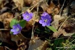 Lila blommor bland höstlöv