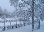 Trädgård i vintervila