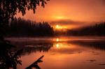 Soluppgång i Kolmårdsskogen