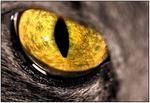 Mashas Eye