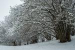 Vinterhassel