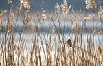 Okänd fågel