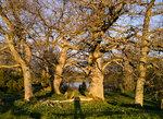 Träd - Spirudden
