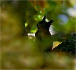 Att sitta fint i trädet